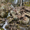 Bissell Brook Falls