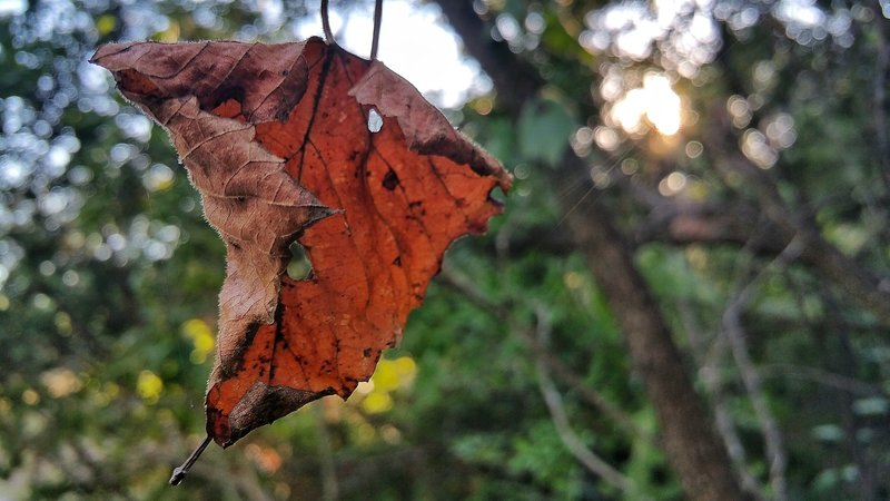 Leaves of autumn