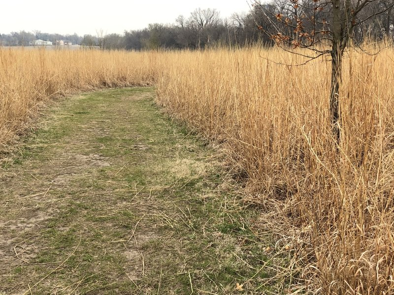 the bluestem prairiegrass lines the edges of your hike