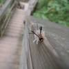 Clifty Falls State Park in Madisonsuper cool caterpillar again