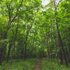 Cedar Valley Nature Trail, Sugar Bottom Recreation Area, Iowa