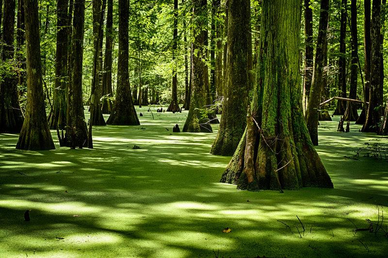 Lake Chicot Swamp