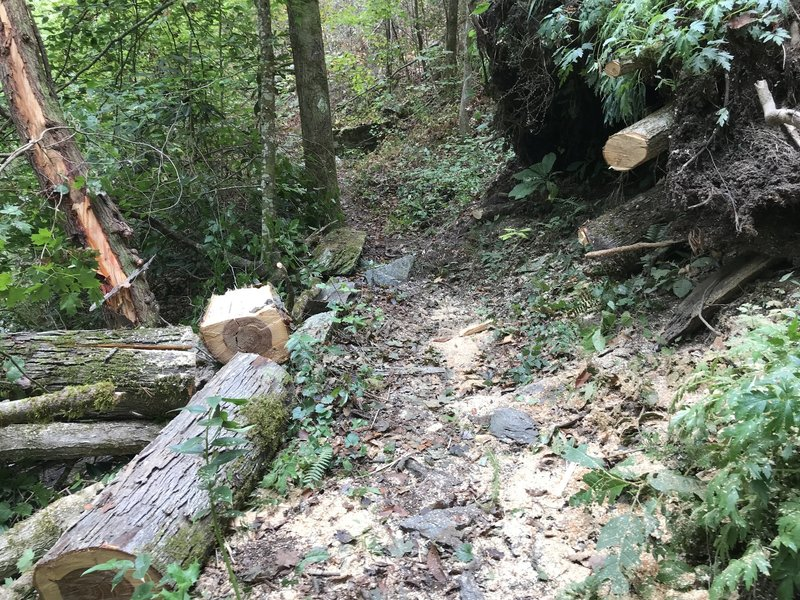 Trail along the Hiwassee River cleared by volunteers