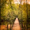 Cascade Falls Trail, Patapsco Valley State Park, Elkridge, Maryland (USA) - April 2017