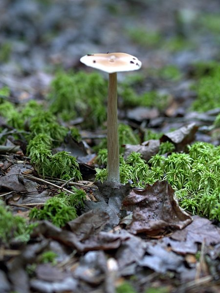 Cedar Swamp Moss & Mushroom (Wellfleet, MA)