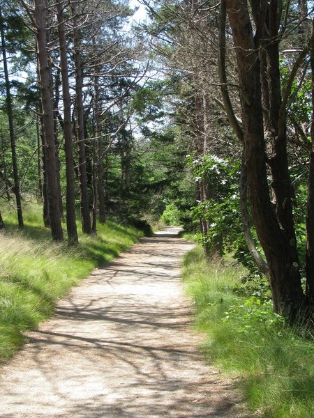 Path at Wellfleet Bay Audubon