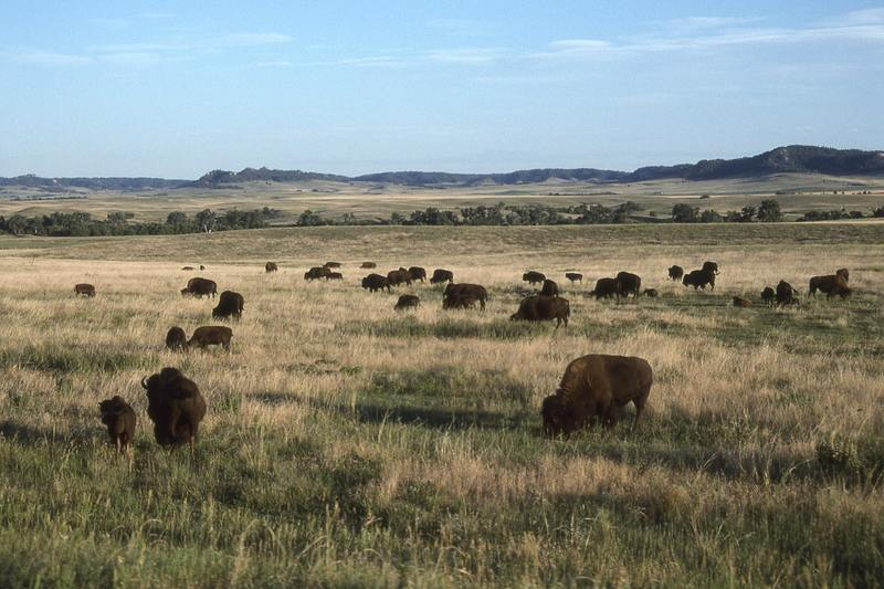 This is an old US Army fort in western Nebraska, now a popular place to stay. Beware: Bison are not tame, so keep your distance!
