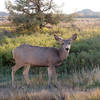 10/13/17  #theodorerooseveltnationalpark #northdakota #wildlife