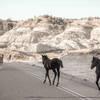 Wild Horses, Theodore Roosevelt National Park