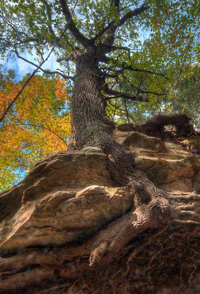 Under a tree at Dead Turtleneck Falls.