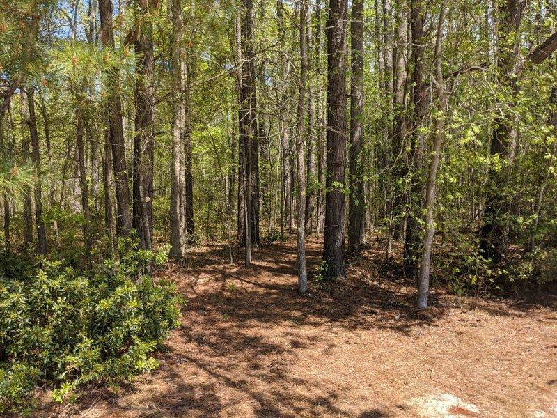 Trailhead to Munden Point Trail