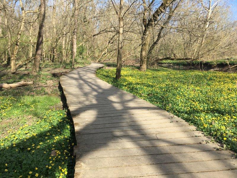 Wetland Boardwalk in Early April