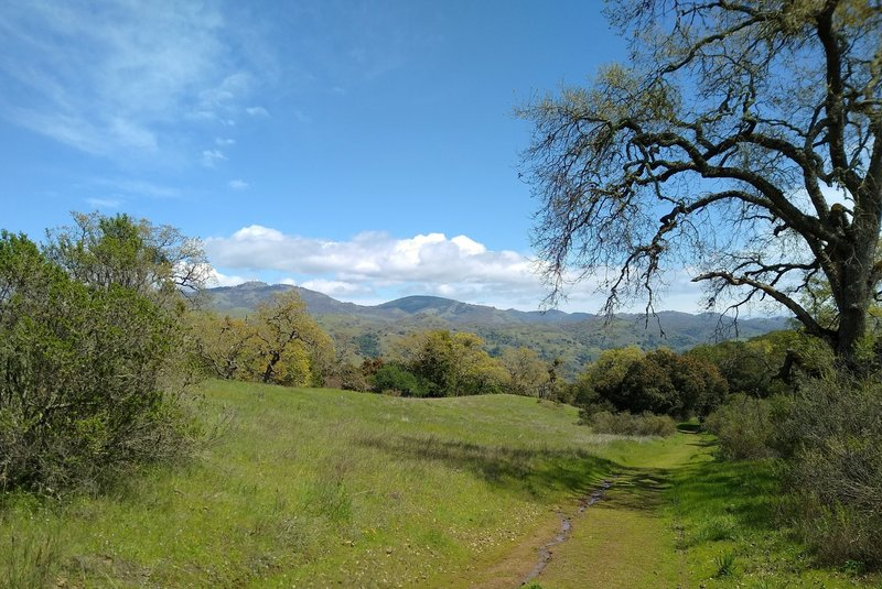 The Diablo Range with Mt. Hamilton, 4,265 ft., on the left is seen in the distance through a break in the trees and brush along Dairy Trail.