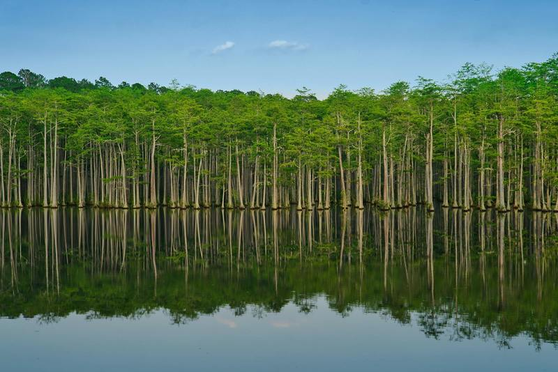 A picture of trees at Campbell's lake in Patrick, South Carolina. The reflection on the water in this one is nice.
