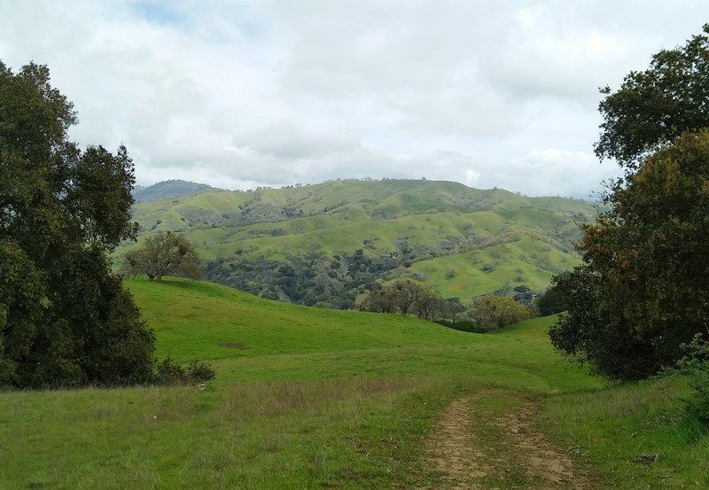 Spring green Diablo Range hills ahead, descending at the end of Heron Trail.