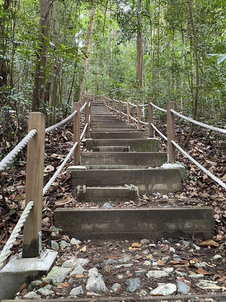The more challenging steps. Thoughtful half steps put in by park service