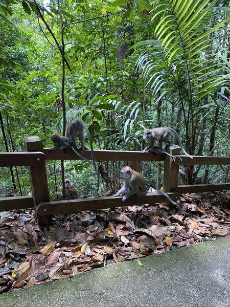 A family of monkeys.