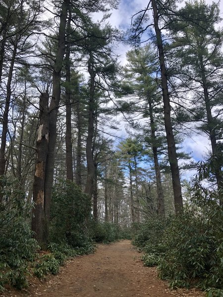 Wide, partly wooded trail