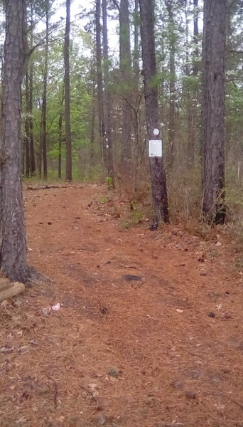 Trail access at Holly Ridge Boat Area