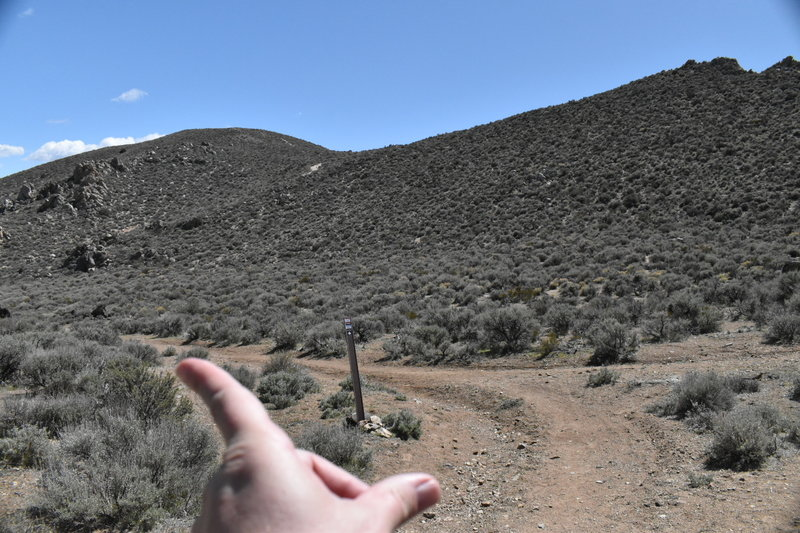 SO many overlapping mountain bike & running trails, make sure to go left when coming back down the trail!