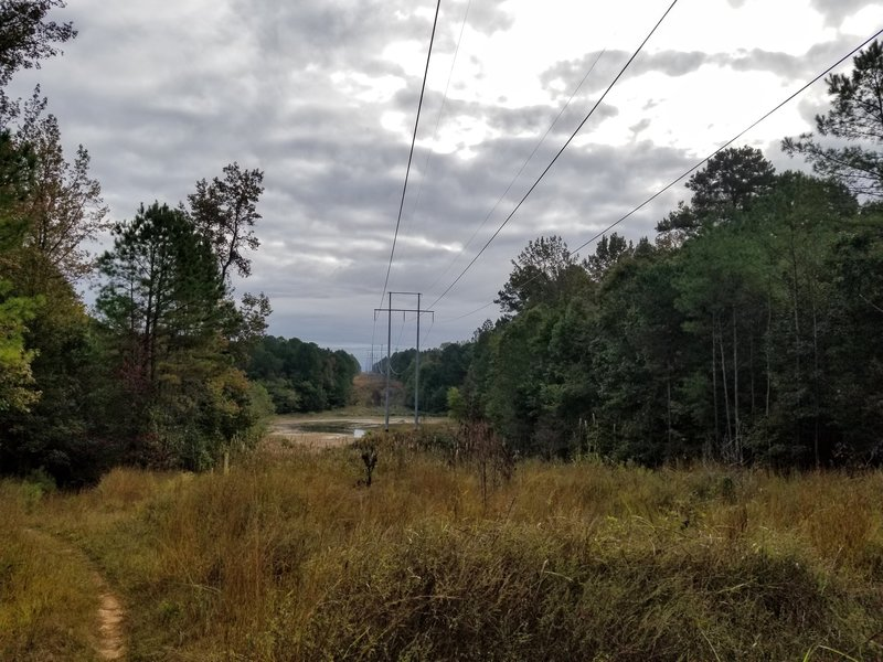 A look down powerline.