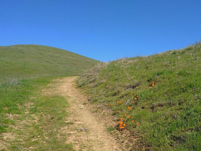 Pala Seca Trail climbs a high grassy ridge with wildflowers - orange California poppies.