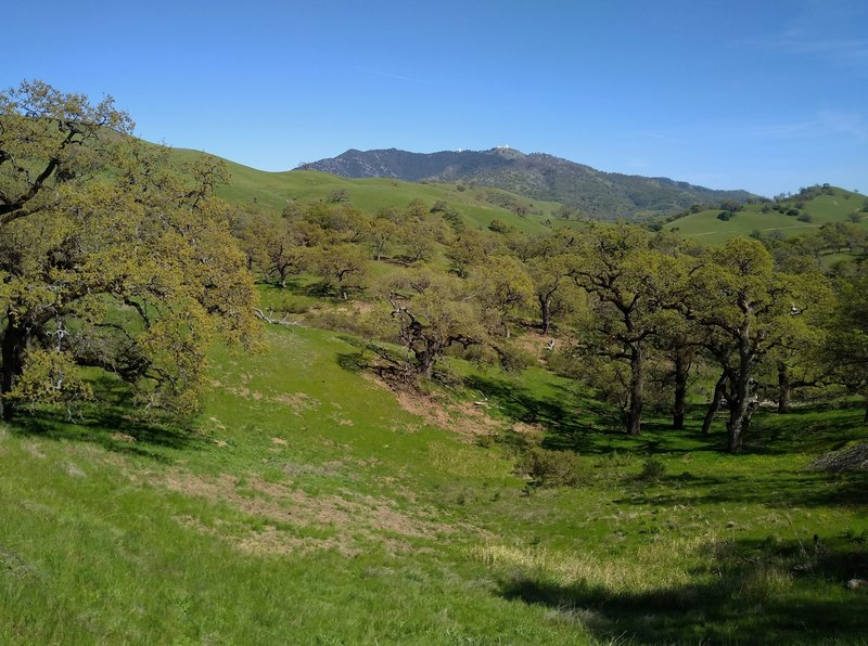 Copernicus Peak, the highest point in Santa Clara County at 4,360 ft. (left of center), and Mt Hamilton, 4.265 ft. (right of center), on their distant ridge to the southeast of Washburn Trail.