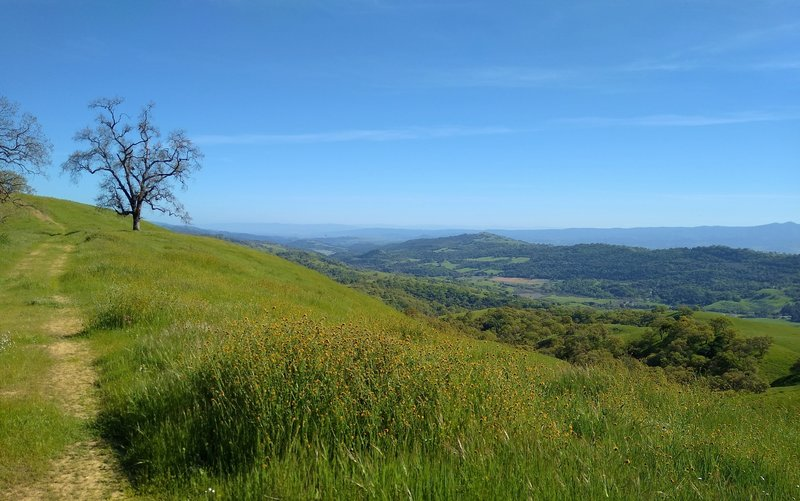 Great views of the blue Santa Cruz Mountains in the distance on the far side of Santa Clara Valley, and nearer views of the ridge across the broad San Felipe Creek Valley, seen from highest stretch of Washburn Trail.  Distant Anderson Lake center left