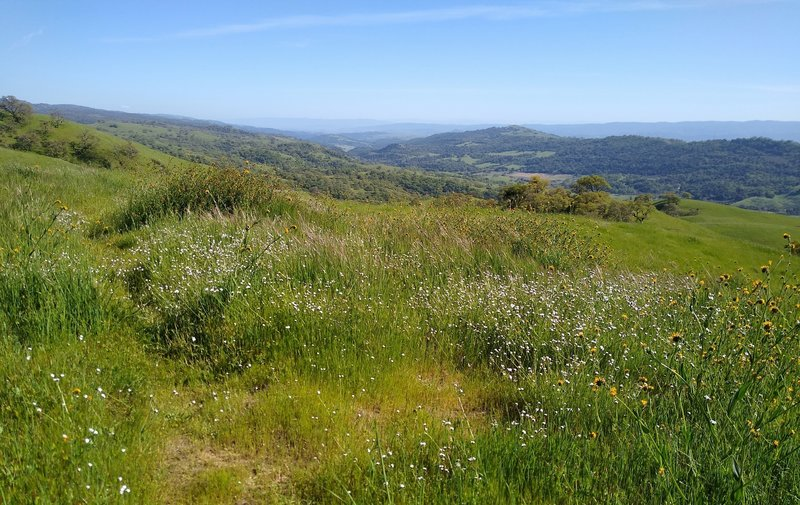 Amid wildflowers, views of Monterey Peninsula (center left, very far distance). In front of it is Anderson Lake in Santa Clara Valley below these Diablo Range hills, Santa Cruz Mountains, and San Felipe Creek Valley and its west ridge (right distance).