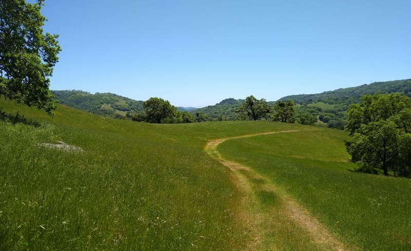 Bass Lake Trail winds through the spring green grass and wooded hills of Joseph D. Grant County Park.