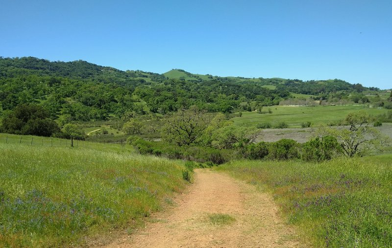 The broad San Felipe Creek Valley (right) and wooded hills to the west of it, are seen from Hotel Trail.
