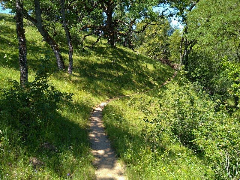 Hike through beautiful, sunlit woods along Loop Trail.