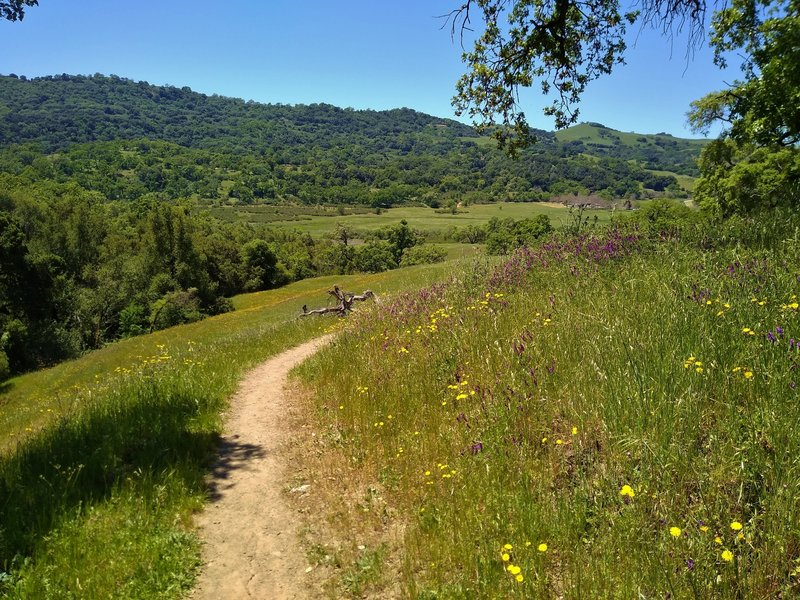 Approaching the San Felipe Creek Valley on Loop Trail amid the grass hills and spring wildflowers.