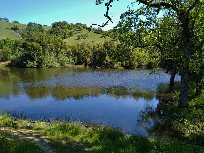 Tiny McCreery Lake, set in the wooded and grass hills, is found at the trail junction of Loop, McCreery Lake, and Lakeview Trails in Joseph D. Grant county Park.