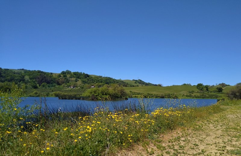 Grant Lake, nestled in the grass hills, is passed by wildflower adorned Bernal Trail.
