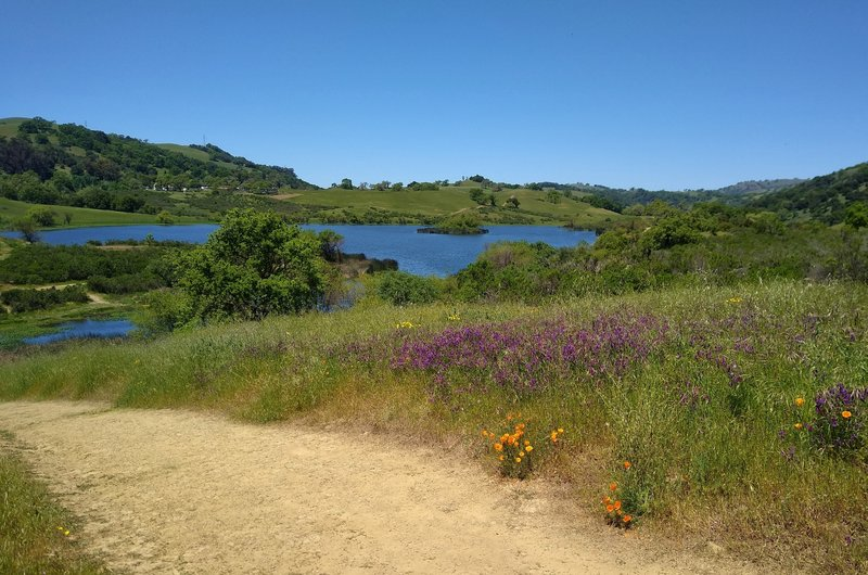 Grant Lake views, spring green hills, and wildflowers - purple smooth vetch and orange California poppies, are what Lakeview Trail is all about.