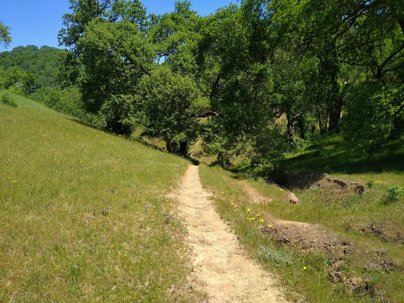 Cut Off Trail is a short cut from grassy Yerba Buena Trail, to the wooded section of Loop Trail.