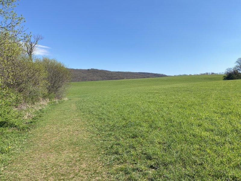 Hay field from Meeker Trail