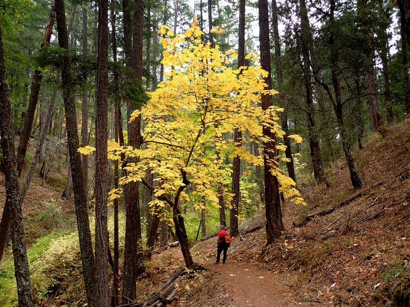 Fall colors along the Collings Mountain Trail