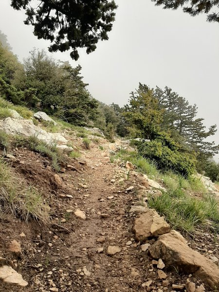 Trail heading uphill