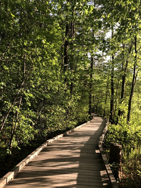 There are several boardwalks along the East side of short park loop