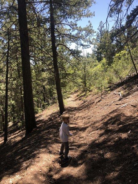 Alamo Peak Trail #109