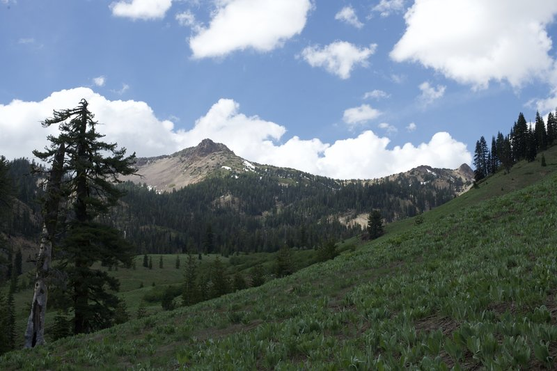 Views of Mount Diller come into view as the trail skirts a mountain meadow.