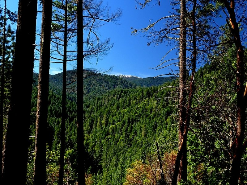 Mount Ashland from the upper end of the Lower Wonder Trail