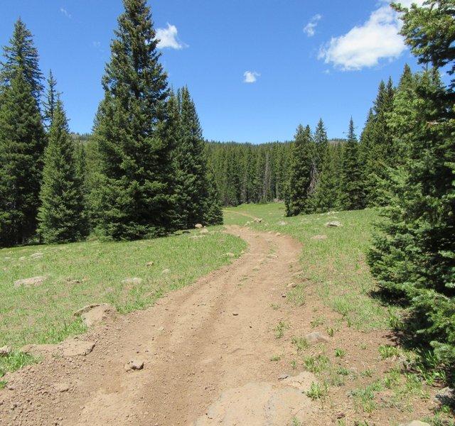 Crossing an open meadow.