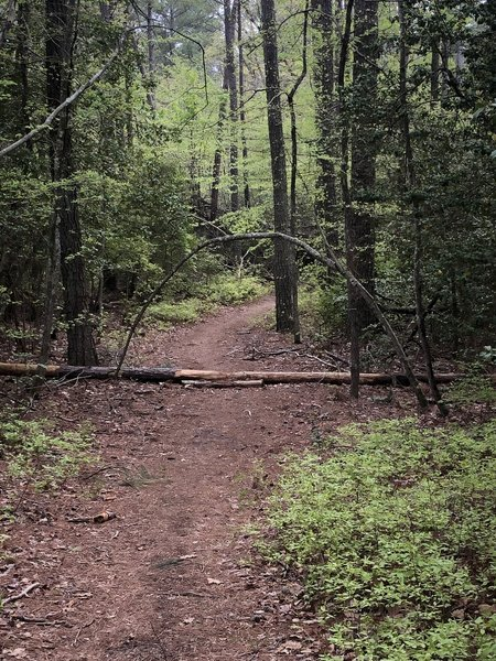 Salem Forest trail