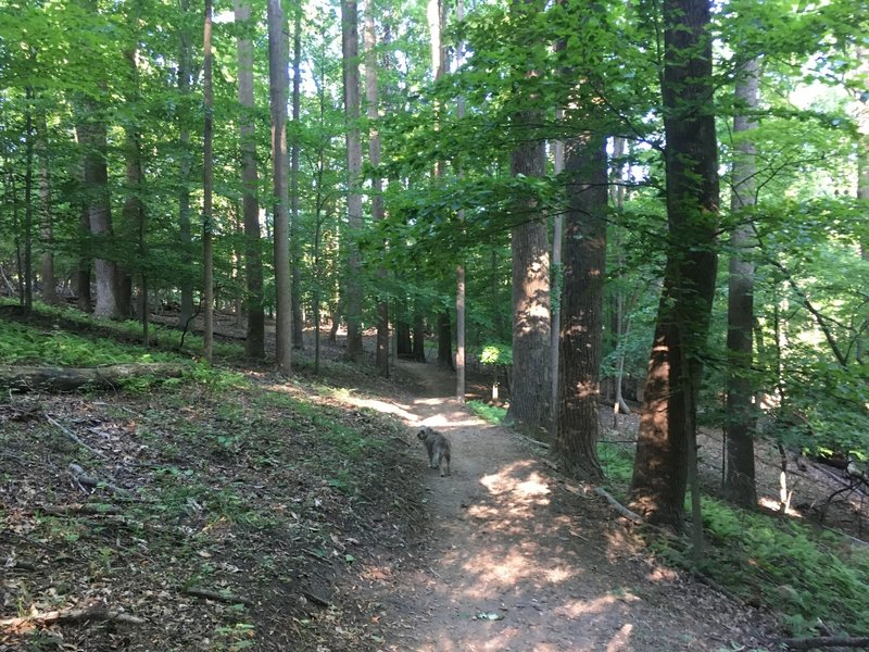 Typical section of the Copperhead Run Trail.