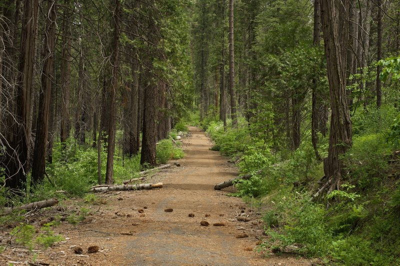 You can see the Big Oak Flat Road as it wanders through the forest.  Imagine driving this road to get into Yosemite.