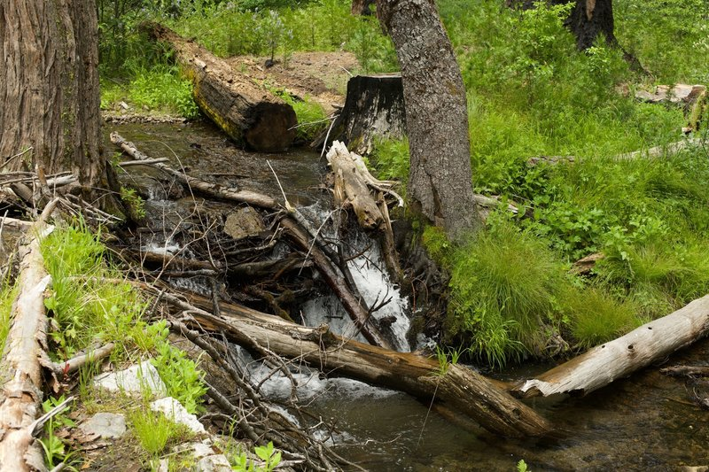 Nature always finds a way.  You can see how the water finds its way downstream despite obstacles being in the way.   Now the creek flows over the trail in order to make its way downhill.