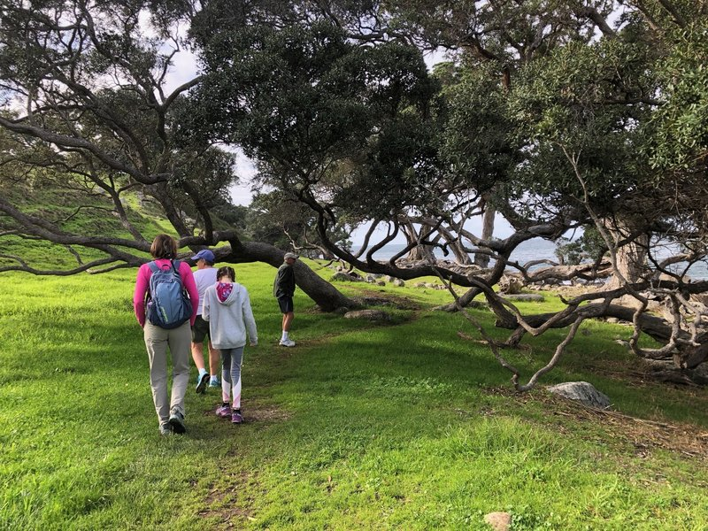 The trail opens up to a beautiful grassy open area with ocean views.